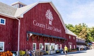 Commercial Cleaning near County Line Orchard
